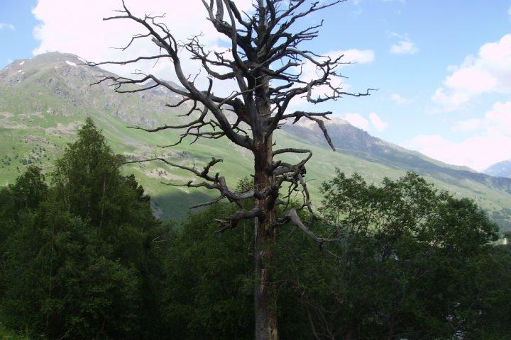 Гора Чегет