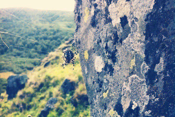 Жизнь на камнях
