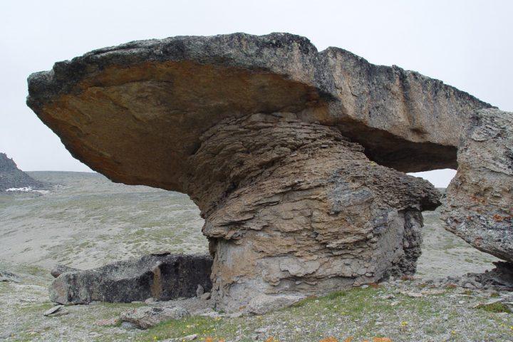 поляна каменные грибы