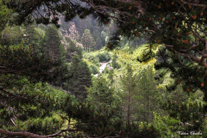 Сылтрансу в зоне Леса